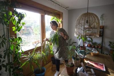 """Dit is de moeilijkste periode voor je kamerplanten: zo voorkom je verwelkte bladeren en sterfgevallen: """"In de winter moet je ze een beetje minder liefde geven"""""""