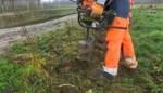 VIDEO. Al 100.000 bomen en struiken voor hagen geplant in Zuid-Hageland