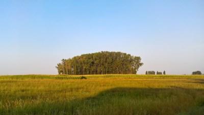 Een bos van vijf bomen is al genoeg: waarom we de impact van kleine bossen op het klimaat niet mogen onderschatten