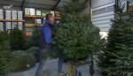 Je kerstboom rechtzetten in 10 seconden? Landenaar Jos Wouters heeft dé truc