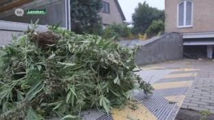 VIDEO. Drugsvangst in hypermoderne plantage in Lanakense villa