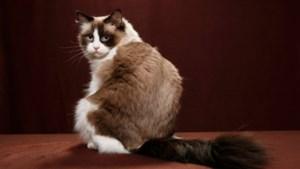 Pas je living aan en verstop eens haar eten: dit moet je weten als je een kat in huis haalt