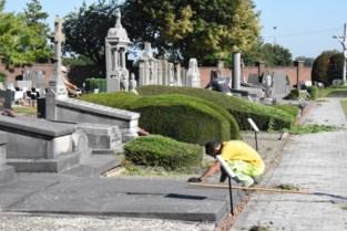 Halle plant 104 bomen op kerkhof