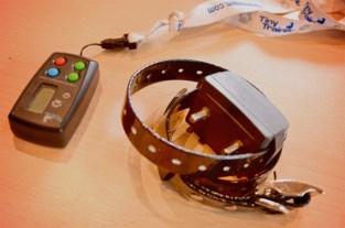 """Dierenasiel lanceert campagne tegen elektrische stroomhalsbanden: """"Ze doen pijn en veroorzaken angst"""""""