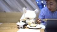 In dit restaurant kan je gezellig dineren met … alpaca's