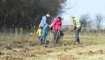 AEG-werknemers planten bos in natuurgebied Berendries