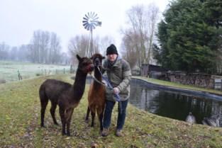 """Fred op wandel met alpaca's: """"Ze zijn zo snoezig dat iedereen meteen verkocht is"""""""