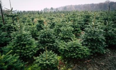 """Waalse kerstboomkwekers in de clinch met Ikea: """"Zij bevuilen de markt in België"""""""
