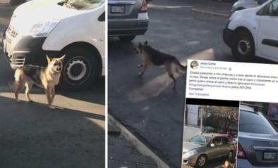"""Gedumpte hond zit auto van eigenaar achterna: """"Ze negeerden hem gewoon"""""""