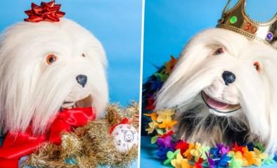 'Oudste hond ter wereld' in de schijnwerpers: hier kijkt Samson het meest naar uit