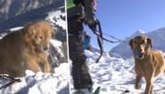 """Zwitserse reddingshonden klaargestoomd voor dodelijk lawineseizoen: """"Mensen nemen meer risico dan vroeger"""""""
