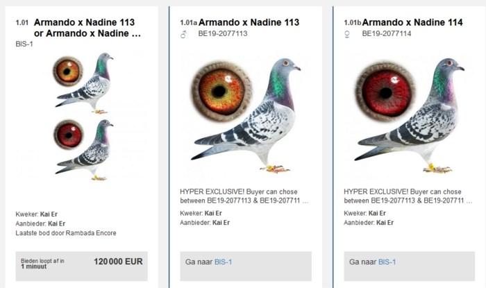 Prijsbeest Armando zorgt opnieuw voor record: 120.000 euro voor duif die nog nooit vloog