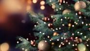Oh (milieuvriendelijke) dennenboom: welke kies ik het best, echt of namaak?