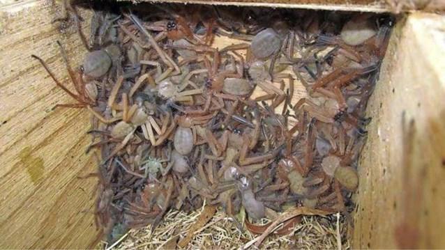 Australische natuurhelpers doen akelige ontdekking wanneer ze houten box openen