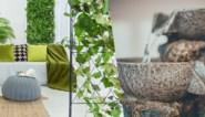 Een fonteintje in de living, oma in de tuin: de woontrends voor 2020
