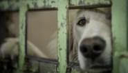 Triest record voor inspectiedienst Dierenwelzijn: afgelopen jaar 3.186 verwaarloosde dieren in beslag genomen