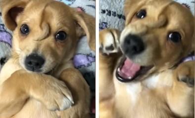 """Iemand bood 2 miljoen dollar voor puppy met staartje op zijn kop, maar asiel houdt hem zelf: """"Hier krijgt hij de juiste aandacht"""""""