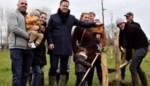 Achtduizend extra bomen in Merchtem: één per gezin