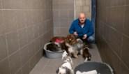 """22 katten en 6 honden in beslag genomen: """"Die dieren waren alles dat ik had, ik begrijp niet waarom ze zijn afgepakt"""""""