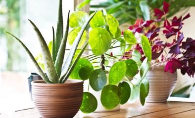 """Ook planten kunnen """"om hulp schreeuwen"""""""