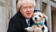 Boris Johnson heeft gegokt en gewonnen