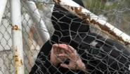 Twee ISIS-weduwes veroordeeld tot gevangenisstraffen van 4 jaar en 40 maanden