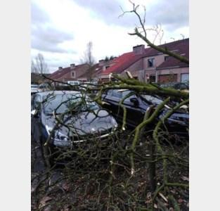 Ook Zandhoven erkend als rampgebied bij voorjaarsstorm van maart