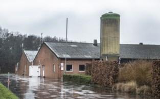 Vlaamse veehouder eerste slachtoffer van Nederlandse stikstofproblemen