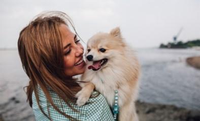 Britse experts onthullen de beste hondenrassen voor jouw sterrenbeeld
