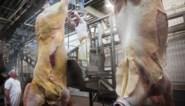 Besmet vlees op nippertje uit voedselketen gehaald: inspecteur Voedselagentschap kon voedselramp net vermijden