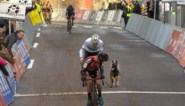 """Eigenares van hond die tussen veldrijders in Overijse liep praat voor het eerst: """"Ik schaam me dood"""""""