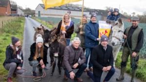 Met tien ezels op kop gaan Kuurnenaars naar De Warmste Week