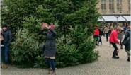 """Kerstboom in Brugge is z'n ballen kwijt: """"Dit kan niet de bedoeling zijn"""""""