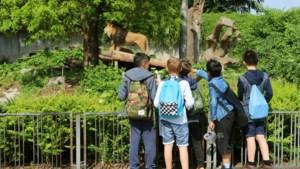 Gemeentebestuur Elsene neemt opmerkelijke beslissing: nooit meer uitstap naar de zoo voor leerlingen van stedelijk onderwijs