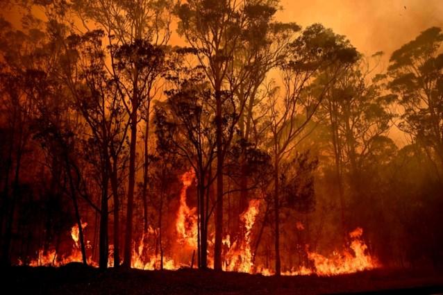 België en Europa bieden hulp aan voor bosbranden in Australië