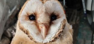 Deze vogels breken alle records (met dank aan de milde winters én de muizen)