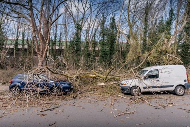 Wichelen niet opgenomen in het rampenfonds voor storm van maart 2019