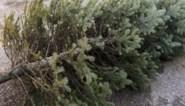 Weg met lichtjes en slingers: wat doe je met je kerstboom in januari?