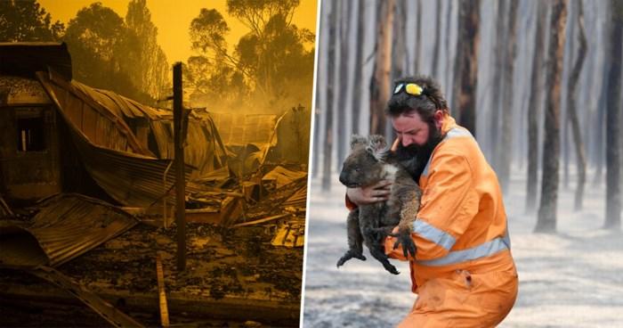 Duizenden personen zijn alles kwijt, maar pas nu de koala's getroffen worden, schiet de wereld in actie