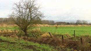 VIDEO. Natuurpunt gaat ruim 16 hectare bos aanplanten in Geetbets