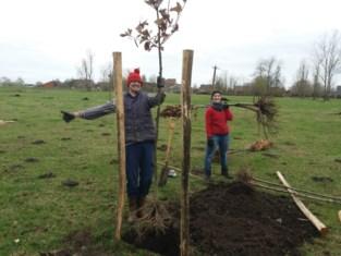 Papes Putten met 98 nieuwe bomen beter bestand tegen extreme weersomstandigheden