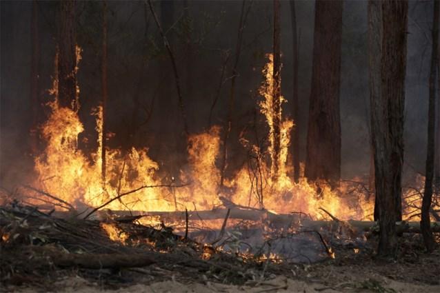 Ook ATP geeft 500.000 dollar voor de bestrijding van bosbranden in Australië