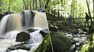 Vier keer gezellig wandelen langs een Belgisch riviertje