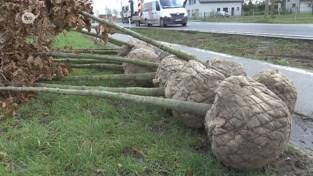 VIDEO. 185 nieuwe bomen bij heraanleg Heirweg in Laarne