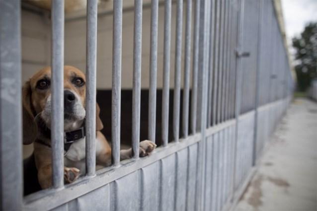 Assistent-dierenarts in opleiding voor rechter voor… dierenmishandeling
