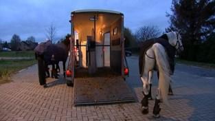 VIDEO. Politiepatrouille te paard trekt door Schaffen: hoge aaibaarheidsfactor maar zeker ook nuttig op het terrein