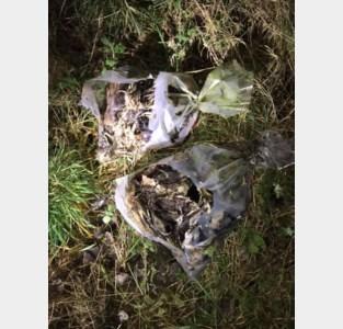 Twee zakken met kadavers van wilde eenden in Zepperen gedumpt