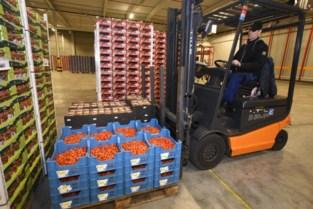 Coöperatie Hoogstraten breekt record met omzet en aanvoer van 242 miljoen euro