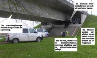Nooit eerder gezien in België: kwekers verstoppen 500 wietplanten in brug