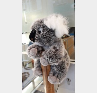 Handelaars schieten in actie om koala's te redden
